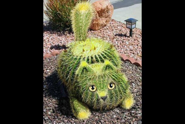 9-cactus-cat