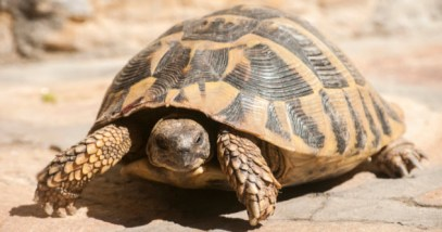 feature-tortoise_000080767037_Small