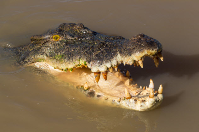 7-crocodile-australia_000066263673_Small