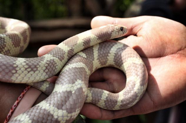 9-snake_000033158364_Small