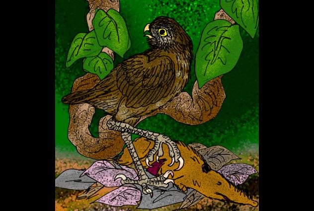 2-Ornimegalonyx