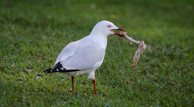 8-bird-bone-in-beak_000076563103_Small