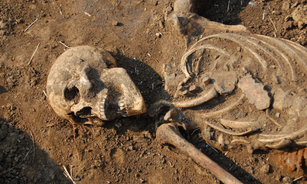 7-excavated-skeleton_000009166672_Small