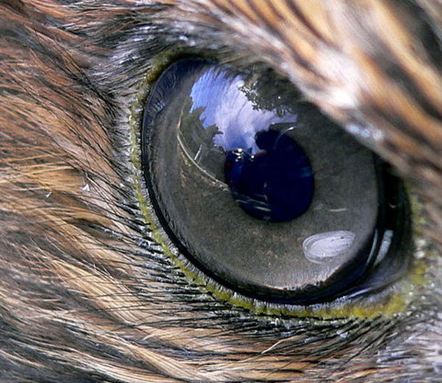 10-hawk-eye