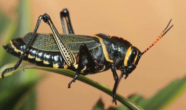 4-locust_7349966_SMALL