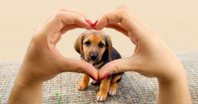feature-b-love-dogs_74484215_SMALL