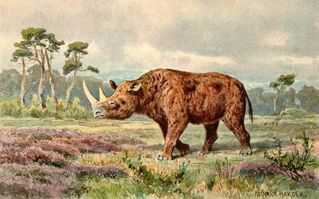 4- woolly rhino