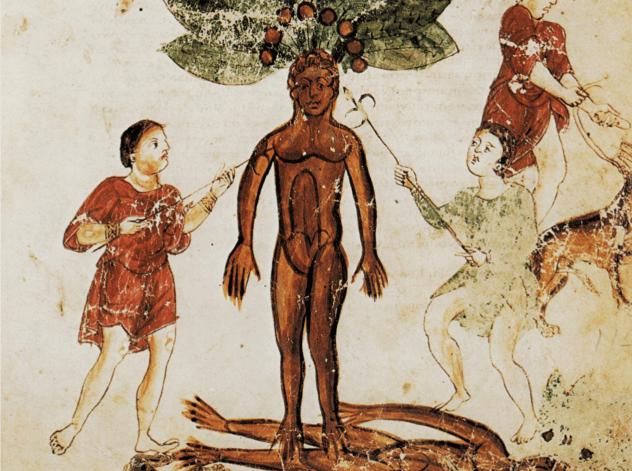 Medieval Mandrake