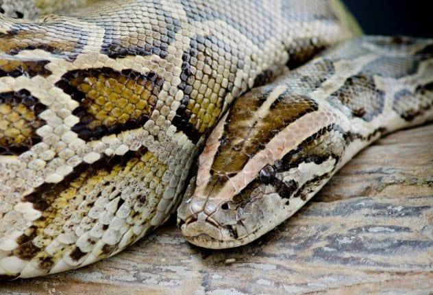 8a-python-477148914