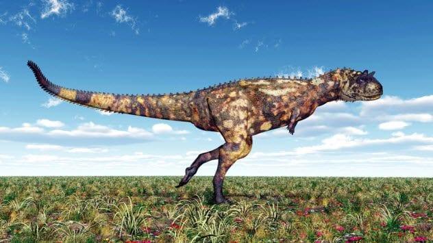 5a-carnotaurus_54179980_small