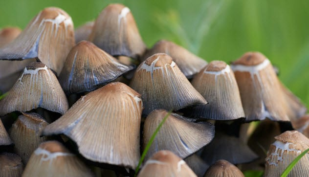 7a-common-ink-cap_95912905_small