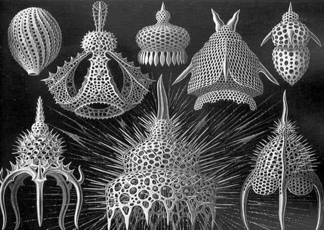 10-radiolarians