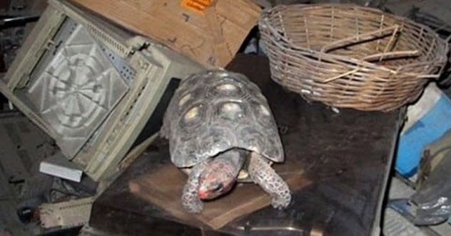 6-manuela-the-tortoise