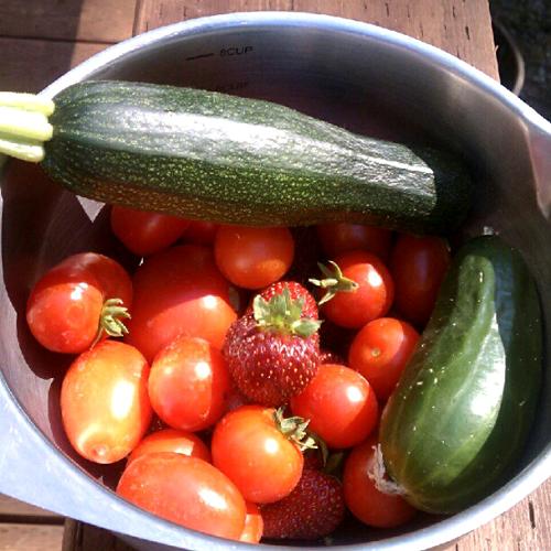 garden picked veggies