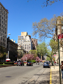 NYC pretty day