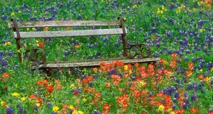 Bench + wildflowers