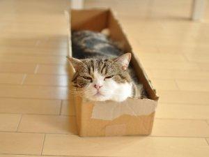 maru the cat3