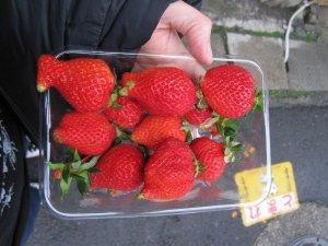freak strawberries in nagasaki