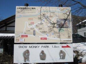 snow monkeys onsen monkeys japan 2