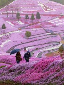 flowers in hokkaido japan