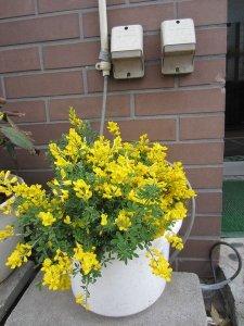 flowers japan 16