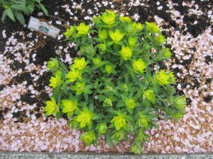 flowers japan 20