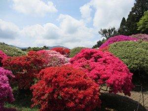 flowers japan 25