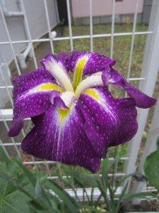 flowers japan 4