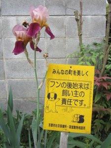 flowers japan 44