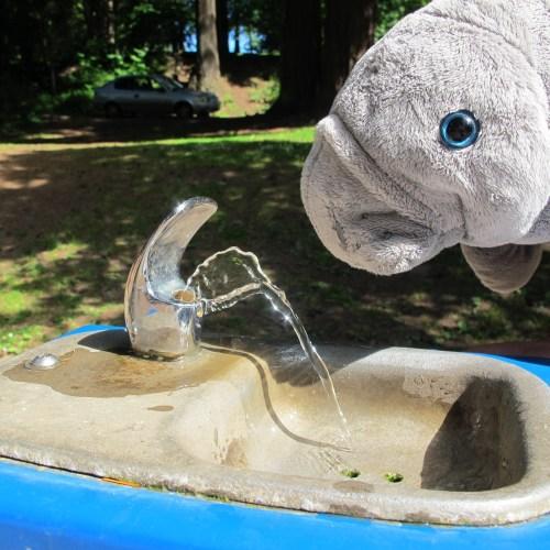 manatee water fountain