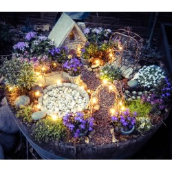 Regaling A Fairy Garden Recommended Plants Are Make A Little Magic Using Solar Wire Led Twinkle Lights Your Fairy Garden Instructions Fairy Garden Flowers Included Flowers garden Best Flowers For Fairy Garden