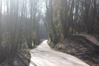 公園の周りの林を散歩