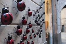壁にはう昆虫たち