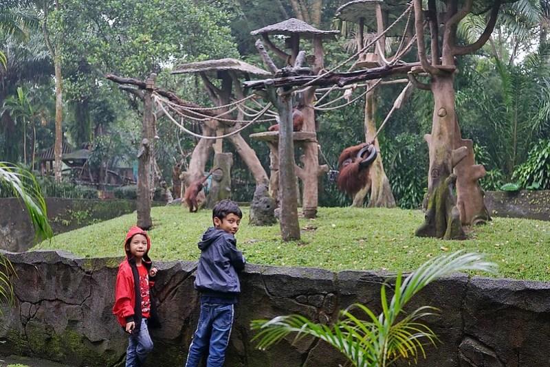 Taman Safari Prigen