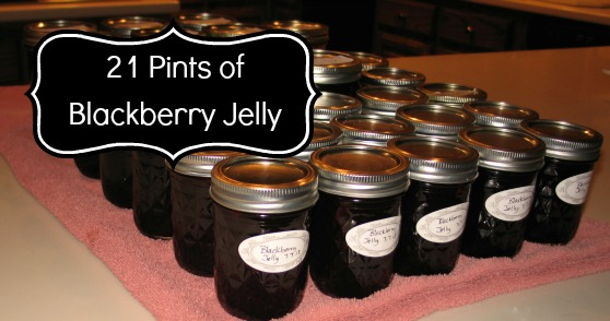 Blackberry Jelly 21 Pints