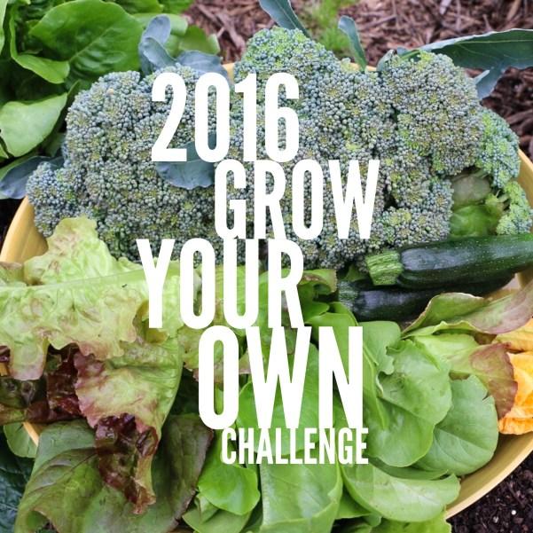Grow your own vegetable garden challenge 2016 dan330 for Grow your own vegetable garden