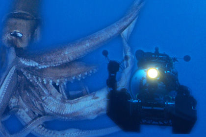 巨大イカが映画化!NHKスペシャルが劇場版にwwwwww