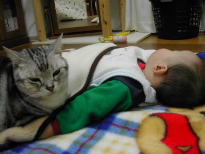 猫と赤ちゃん37