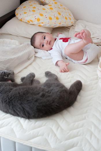 猫と赤ちゃん6