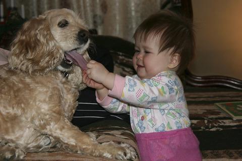 犬と赤ちゃん13