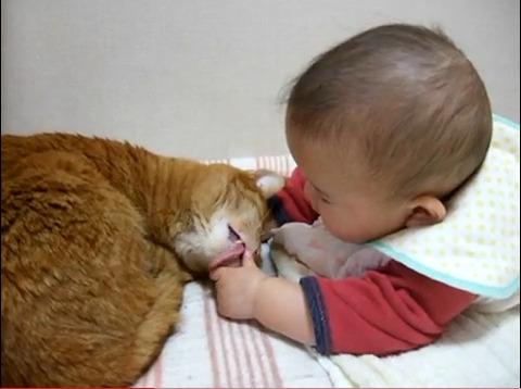 猫と赤ちゃん15