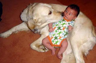 犬と赤ちゃん10