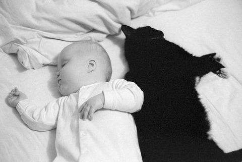猫と赤ちゃん7