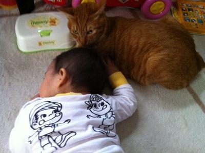 猫と赤ちゃん4