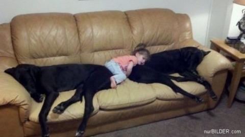 犬と赤ちゃん28