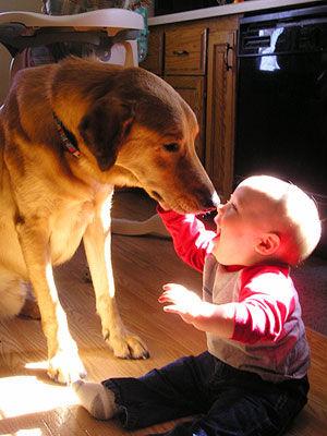 犬と赤ちゃん27