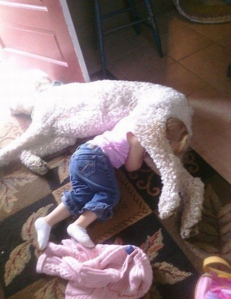 犬と赤ちゃん26