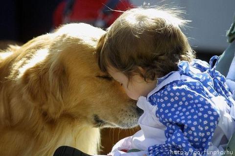 犬と赤ちゃん53