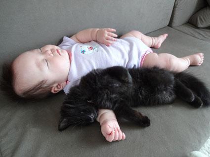 猫と赤ちゃん42