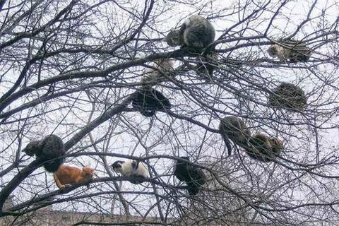 吹くほど可愛い画像『猫のなる木』